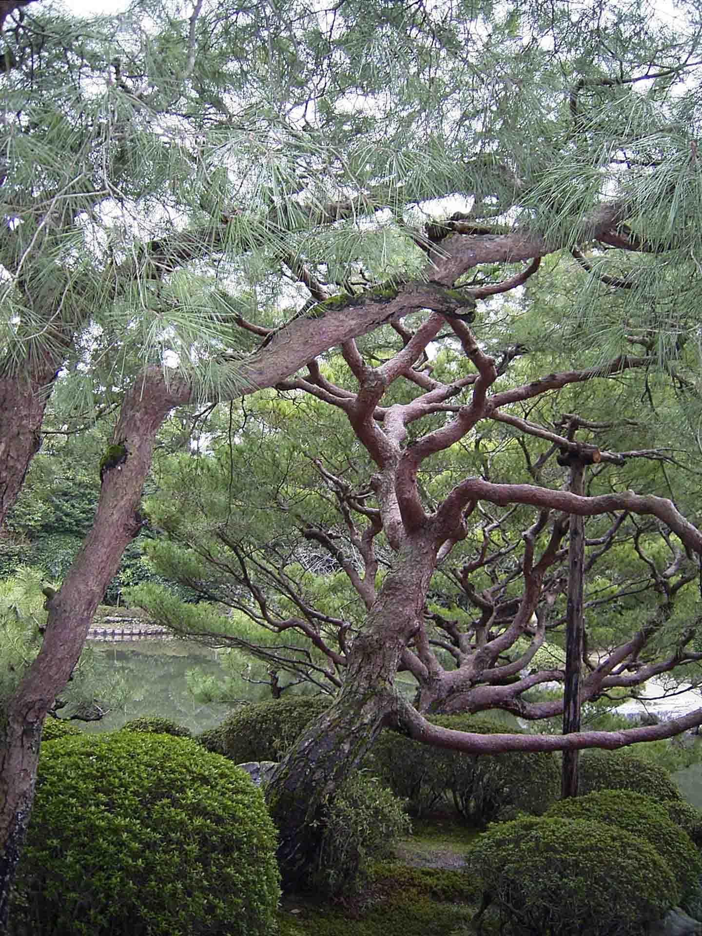 exklusive bäume - einzelstücke, exklusiv und einzigartig